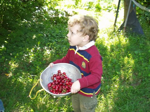 Joe with cherries from our neighbors tree.