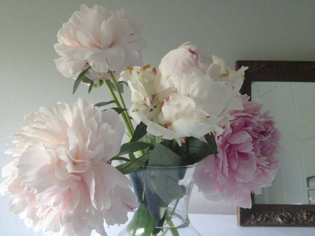 Peonies from the garden.