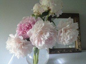Pink peonies from the garden.