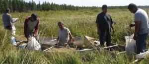 wild rice harvest