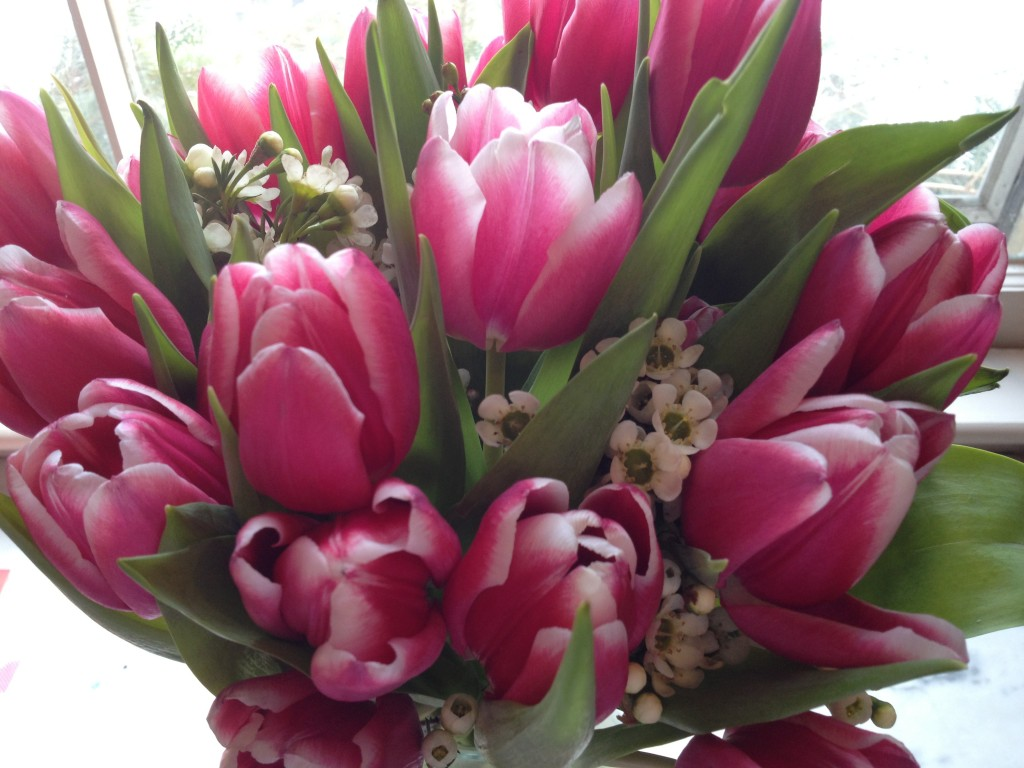 I love tulips more than roses for Valentine's Day. Photo credit: Rebecca Penovich