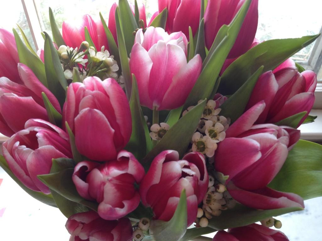 I love tulips more than roses for Valentine's Day. Photo credit: Rebecca Penovich